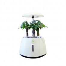 智能植物生长机